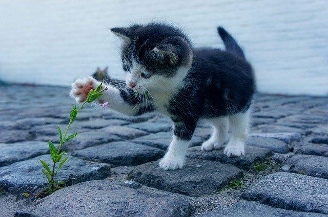 Vedd észre az úton nyíló virágokat!